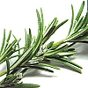 Essential Oil, Rosemary (Spanish)