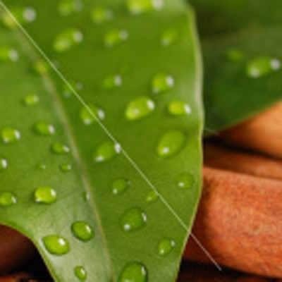 Essential Oil, Cinnamon Leaf