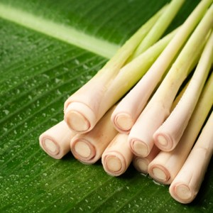 Essential Oil, Lemongrass