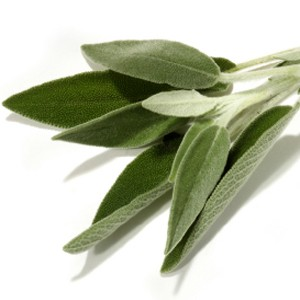 Fragrance, Sage (Fresh Cut)